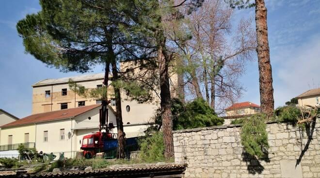 Abbattimento alberi Fontanavecchia