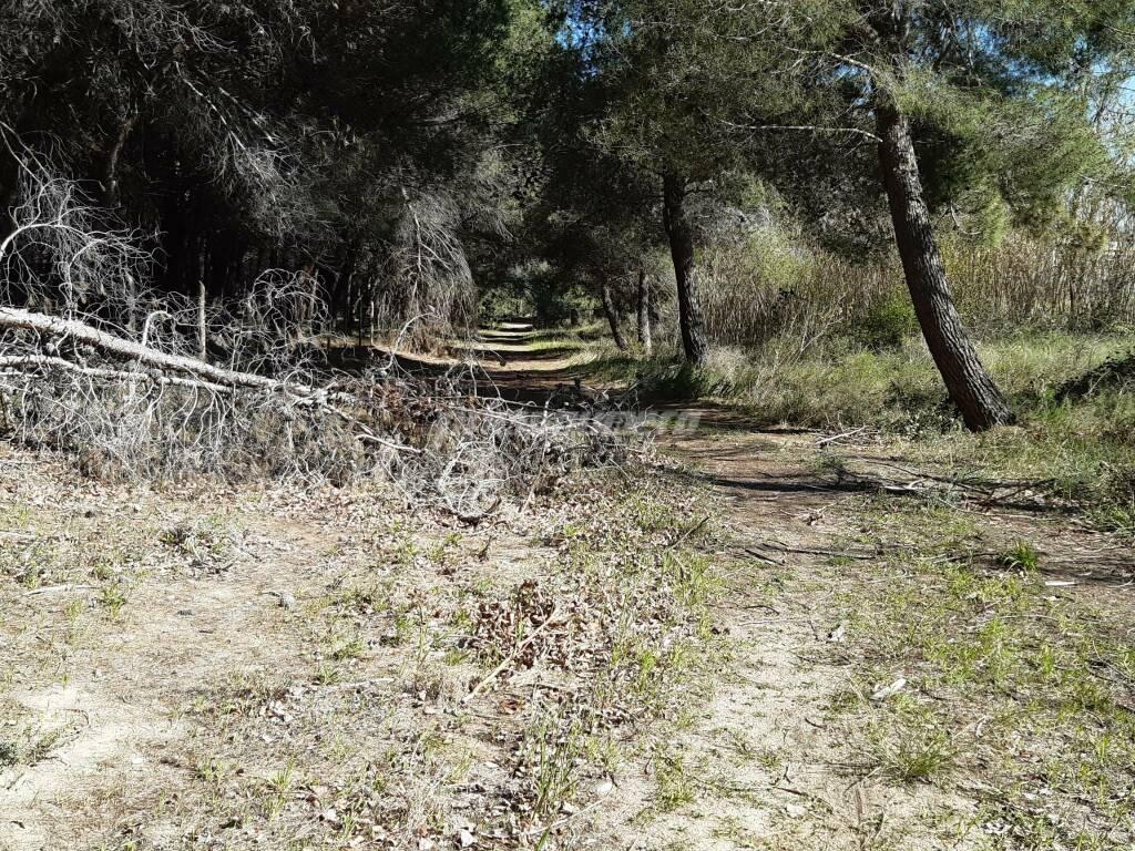 Pista ciclabile pineta Petacciato