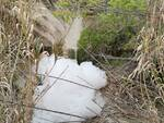 Schiuma torrente biferno inquinato detersivi ambiente depuratore