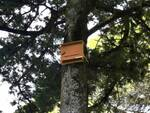 Casette per pipistrelli a Campobasso Villa de Capoa