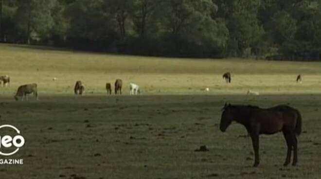 cavalli Pantano della zittola cavallo pentro Montenero Valcocchiara
