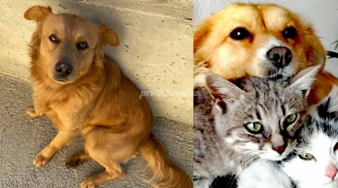 Max e Lunetta cani avvelenati Busso