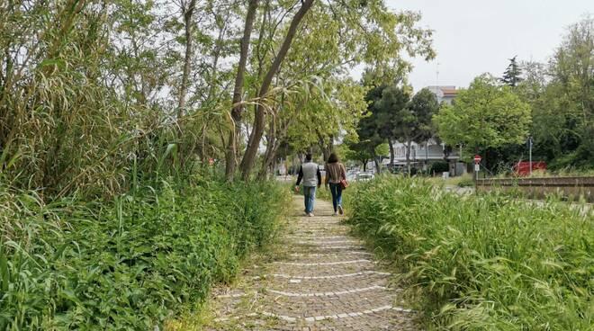 Giungla erba alta jurassic. Park Termoli serpenti vegetazione sfalcio verde