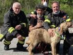 recupero cane vigili del fuoco isernia