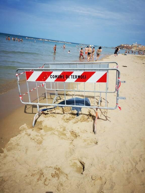 carcassa tartaruga spiaggia termoli transenne