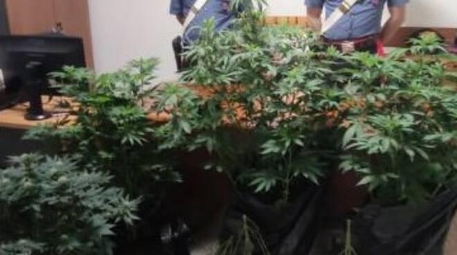 marijuana sequestro carabinieri lucito