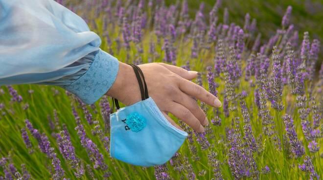 campo lavanda fattoria farfalla larino di giuseppe cianti