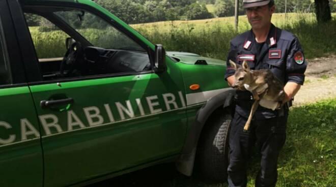 Carabinieri Forestali cerbiatto