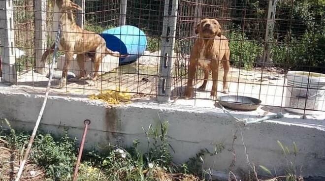 Cani maltrattati Vinchiaturo