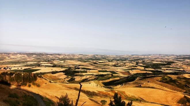 Grano paesaggio estivo Guglionesi vallata campi