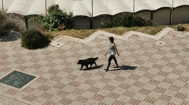 Cane passeggiata trabucco guinzaglio