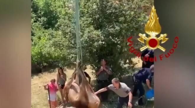Cervo salvato vvf