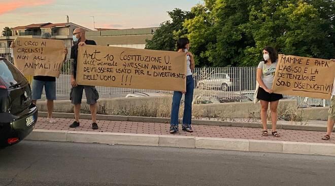 Circo mosca termoli proteste cartelli