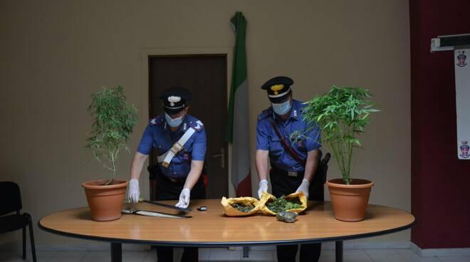 carabinieri larino serra marijuana