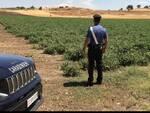 carabinieri lavoro nero campagne agricoltura