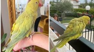 Il pappagallo Raul