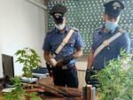 carabinieri piante di marijuana