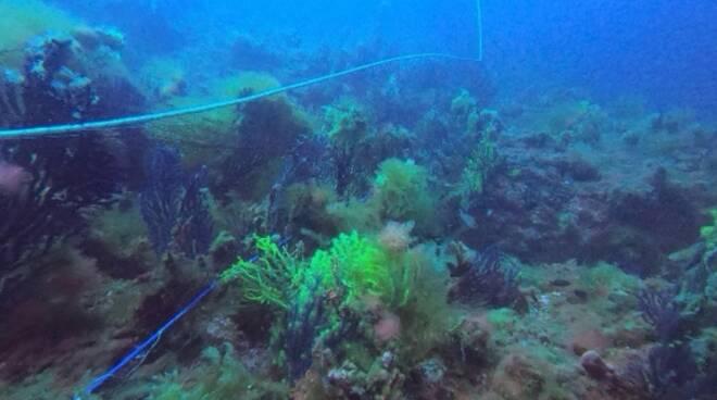 Rete pesca Tremiti sequestro capitaneria