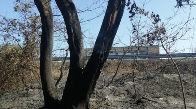 bosco fantine bruciato campomarino