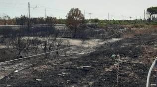 Campomarino incendi vegetazione bruciata