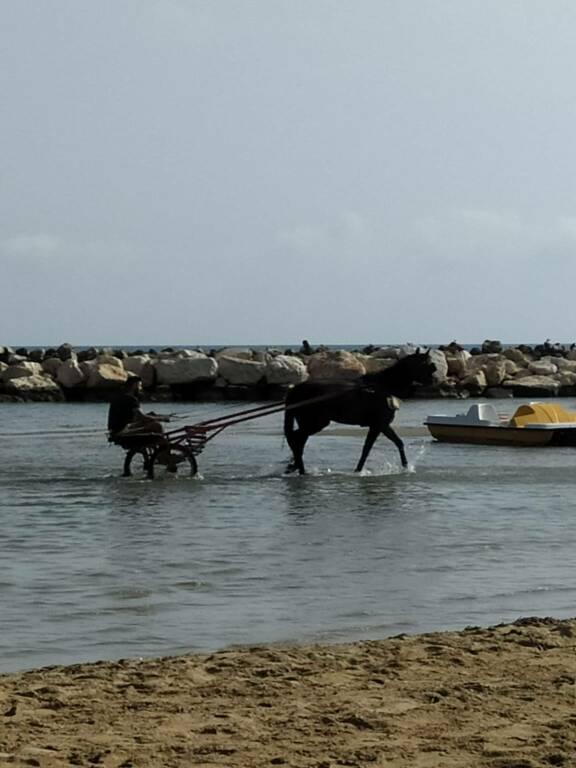 Cavallo baia paradiso