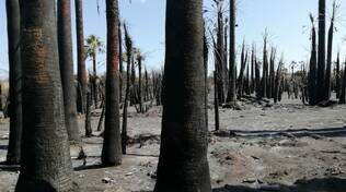 rio vivo palme alberi incendi cenere