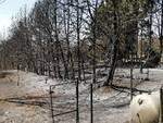 ribo incendio guglionesi