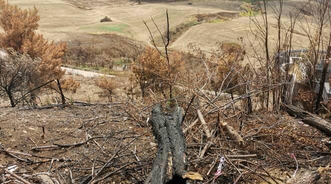 Campi alberi bruciati incendi Guglionesi