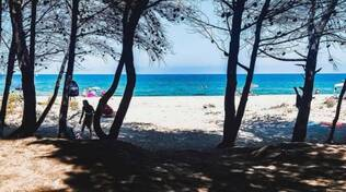 Spiaggia pineta Campomarino