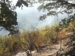 incendio bosco rotello