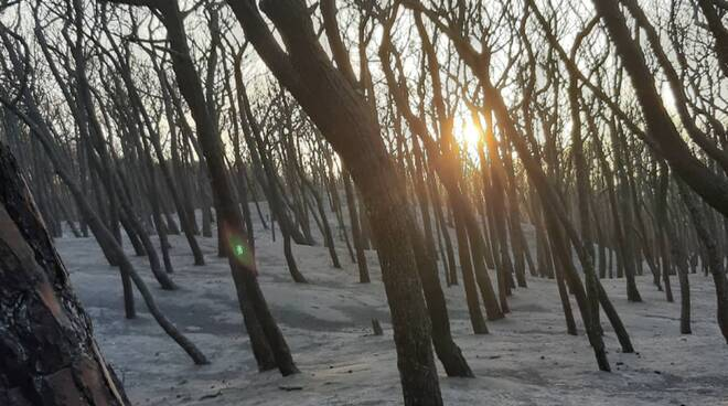 Pineta bruciata campomarino