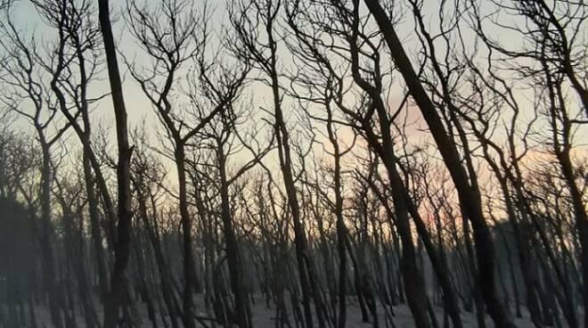Pineta Campomarino dopo incendio