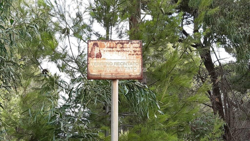 Pineta Petacciato alberi natura
