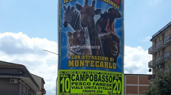Circo manifesti Campobasso