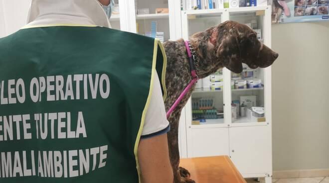 Protezione animali randagismo maltrattamento cani