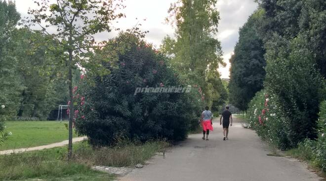 parco gente passeggio corsa