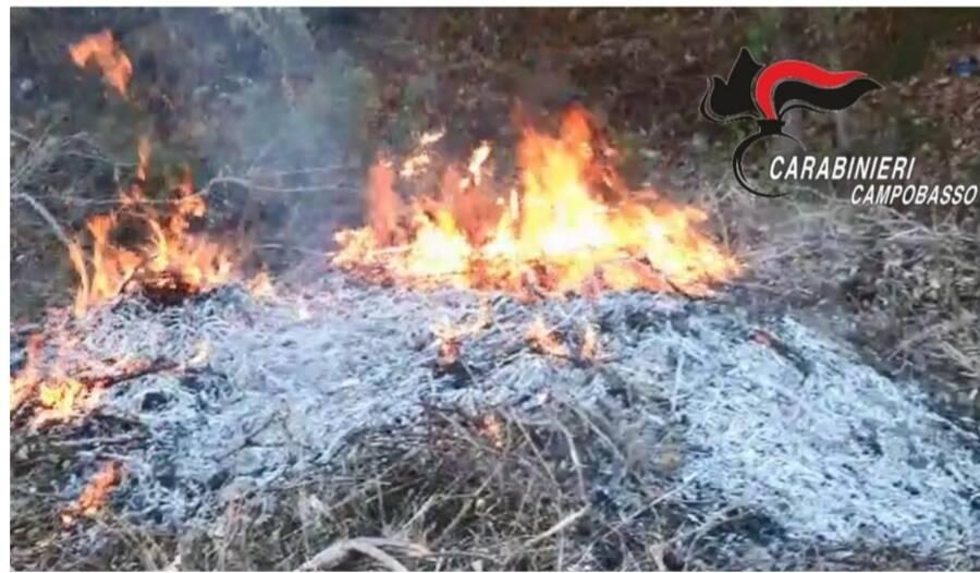 incendio sterpaglie carabinieri cb