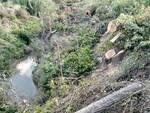 Scempio sinarca alberi tagliati
