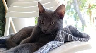 gatto margot