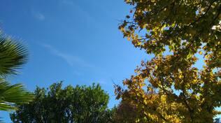 Meteo foglie gialle cielo sereno autunno