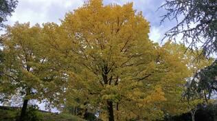 autunno meteo foglie
